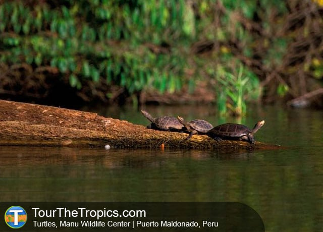 Manu Lake - Things to do in Manu National Park