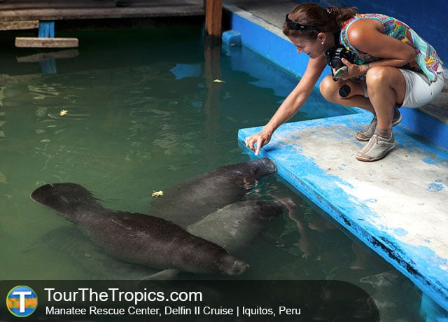 Manatee Rescue Center, Delfin II Cruise - Things to do in Peru