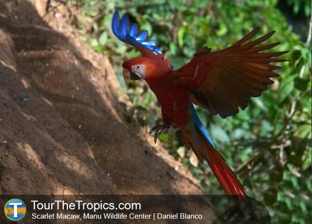 Macaw at Manu Wildlife Center Lodge