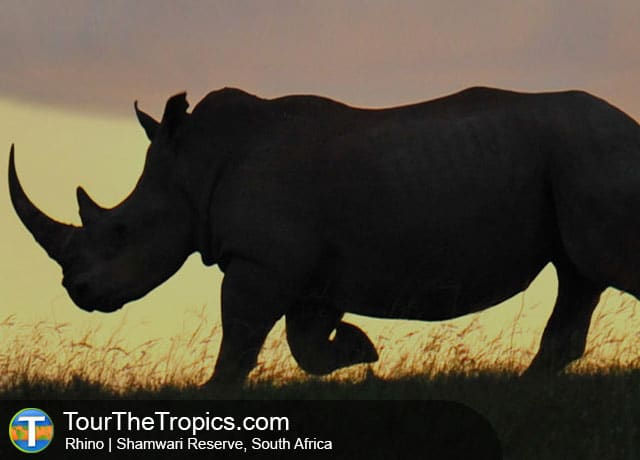 Rhino - Shamwari Game Reserve Lodges