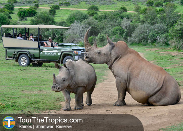 Rhino - Top 5 savanna Tours in South Africa
