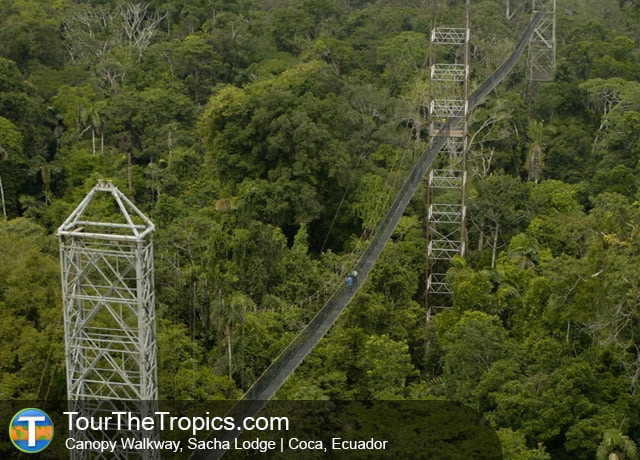 Sacha Lodge Canopy Walkway Coca Ecuador & 8 of the Top Canopy Tours in the Amazon Rainforest