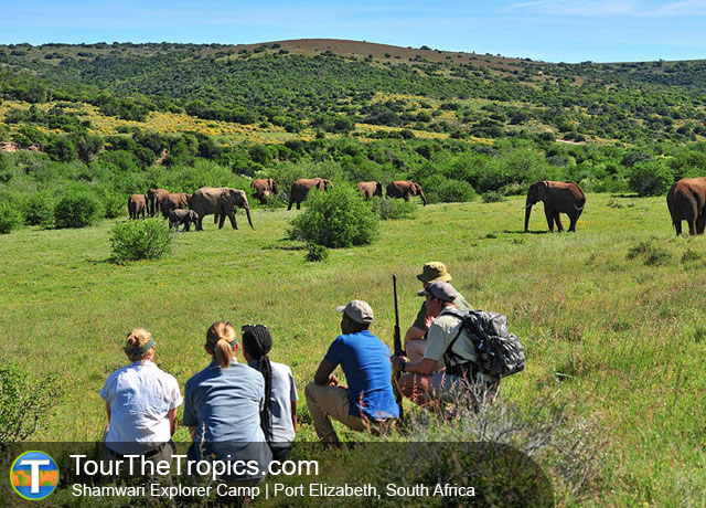 The Shamwari Explorer Camp - Shamwarior or Sanbona
