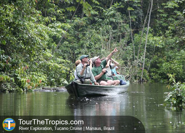 Tucano Cruise - Amazon Rrainforest