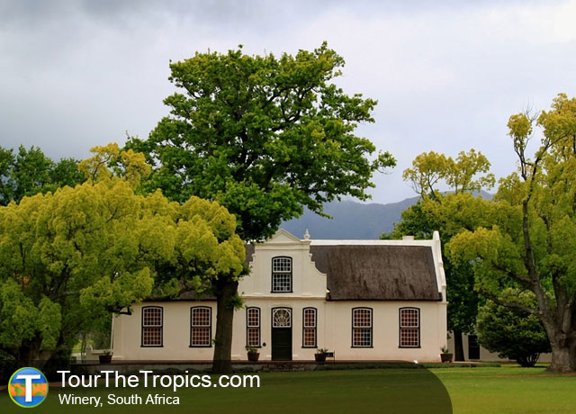 Winery South Africa - Top Attractions in South Africa