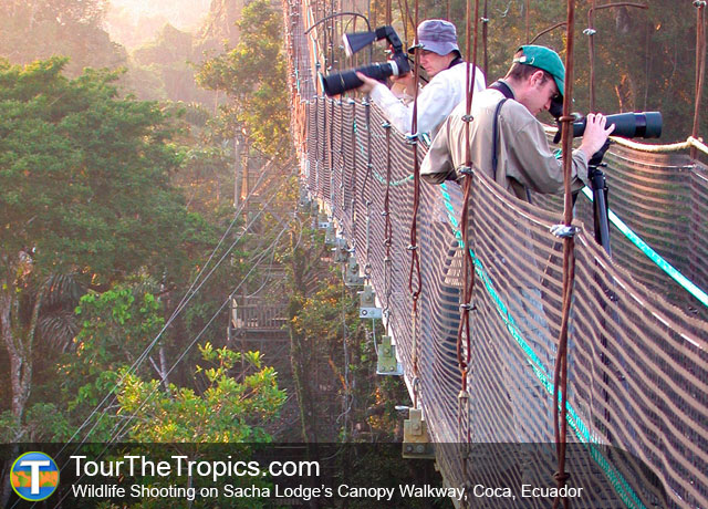 Sacha Lodge Canopy Walkway - Amazon from Quito, Ecuador's Amazon