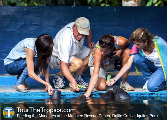 Manatee Rescue Center - Best Tourist Cities in Peru