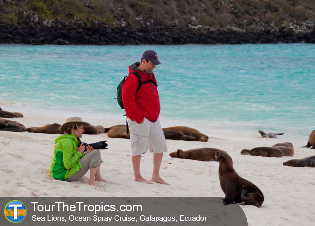 Sea Lions on the Ocean Spray Cruise - Luxury Cruises of the Galapagos Islands